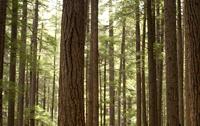 全球林业资源