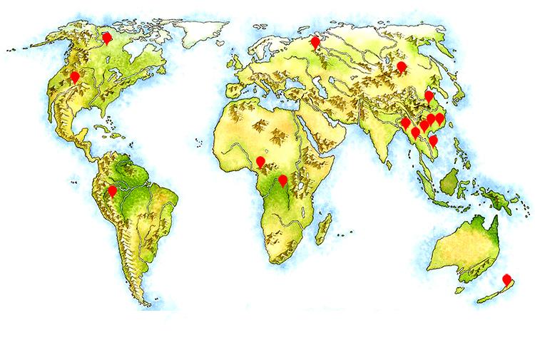 全球林业资源分布图